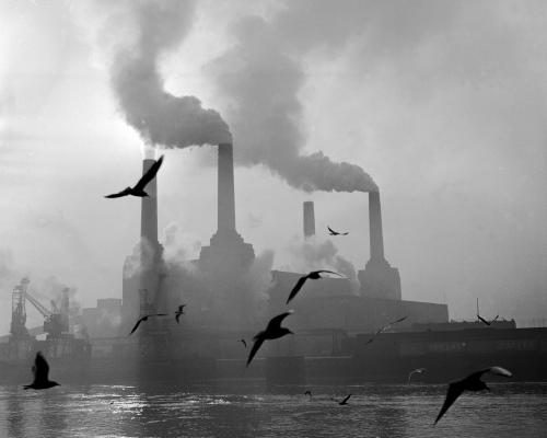 Seagulls drift above the waters of the Thames while in the background