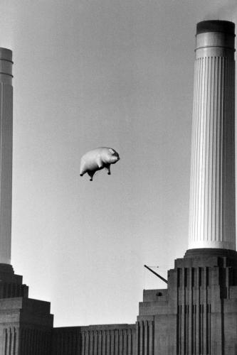 A 40-foot long inflatable pig suspended between two of the chimneys at Battersea Power Station